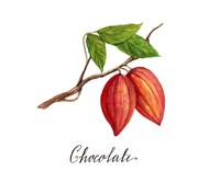 Chocolate Fine-Art Print