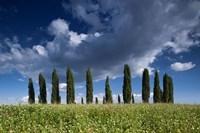 Clouds over Cypress Hill Fine-Art Print