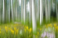 Aspens And Wildflowers Fine-Art Print