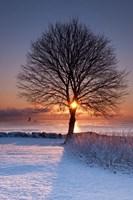 Sun In Tree Fine-Art Print