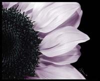Hints of Lavender Fine-Art Print