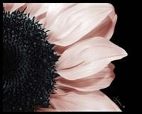 Whisper of Pink Fine-Art Print