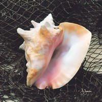 Conch with Net Fine-Art Print