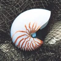 Nautilus with Net Fine-Art Print