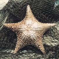 Starfish with Net Fine-Art Print