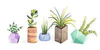 Succulent Display I Fine-Art Print