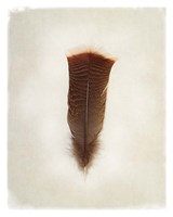 Feather III Fine-Art Print