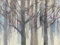 Forest Light Fine-Art Print