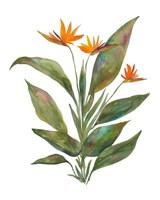 Bright Bromeliad Fine-Art Print