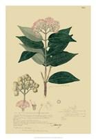 Descubes Tropical Botanical I Fine-Art Print