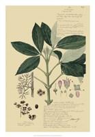 Descubes Tropical Botanical II Fine-Art Print