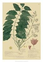Descubes Tropical Botanical III Fine-Art Print