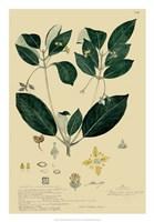 Descubes Tropical Botanical IV Fine-Art Print