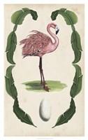 Antiquarian Menagerie - Flamingo I Fine-Art Print