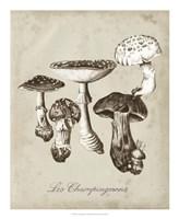 Les Champignons I Fine-Art Print