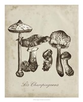 Les Champignons II Fine-Art Print