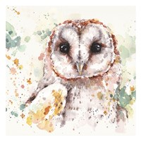 Australian Barn Owl Fine-Art Print