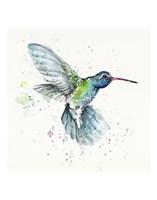 Hummingbird Flurry Fine-Art Print