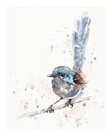 Mischief in the Making (Variegated Fairy Wren) Fine-Art Print
