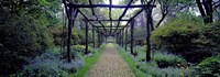 Garden path, Old Westbury Gardens, Long Island Fine-Art Print