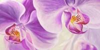 Purple Orchids Fine-Art Print