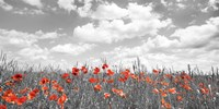 Poppies in Corn Field, Bavaria, Germany Fine-Art Print