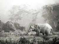 African Elephant, Ngorongoro Crater, Tanzania Fine-Art Print