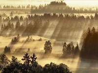 Fog Impression At Sindelbachfilz, Bavaria, Germany Fine-Art Print