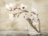 Fiori di Magnolia Fine-Art Print