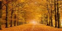 Woods in Autumn Fine-Art Print