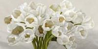 Tulipes Blanches Fine-Art Print