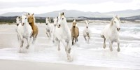Horses on the beach (detail) Fine-Art Print