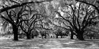Avenue of Oaks, South Carolina Fine-Art Print