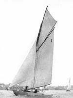 Sailing in Sydney Harbour Fine-Art Print