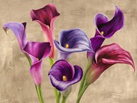 Multi-colored Callas Fine-Art Print