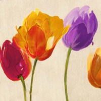 Tulips & Colors (detail) Fine-Art Print