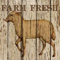 Farm Fresh Lamb Framed Print