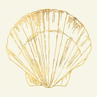 Coastal Breeze Shell Sketches V Fine-Art Print