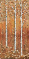Birch Tryptic I Fine-Art Print