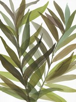 Tropical Greens I Fine-Art Print