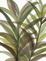 Tropical Greens II Fine-Art Print