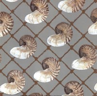 Nautilus Net Fine-Art Print
