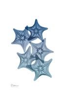 Tidal Starfish 1 Fine-Art Print