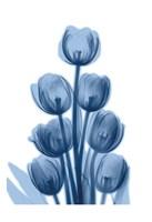 Indigo Spring Tulips Fine-Art Print