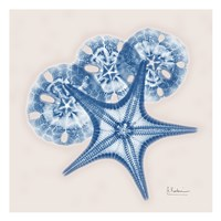 Cerulean Starfish and Sand Dollar Fine-Art Print