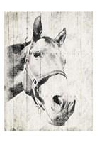 Vintage Horse Fine-Art Print