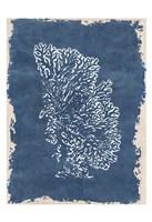 Blue Hue Coral 3 Fine-Art Print