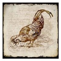 Vintage Rooster Square 3 Fine-Art Print