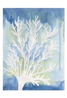 Blue Coral Fine-Art Print