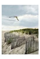 Dawning Seagull and Godbeams Fine-Art Print